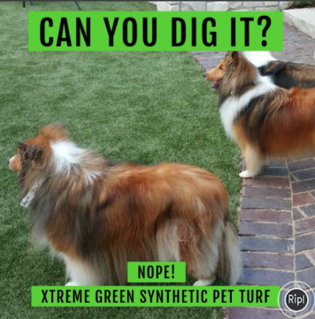 Synthetic Pet Turf - Xtreme Green